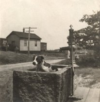 Image of Mascot in So. Wellfleet water trough - W0534