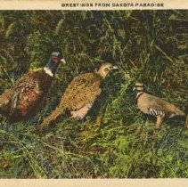 Image of 1979.009.00342 - Postcard