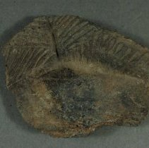 Image of Sherd, exterior view