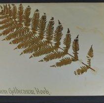 Image of 2017.040.003 - Specimen, Botanical