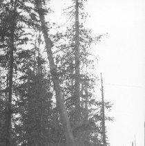 Image of 3096 - Print, photograph