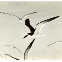 Image of 1999.3.194 - Print, Photographic