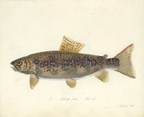 Image of Library QL633 .G7 L48 - The Freshwater fishes of Great Britain.