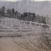 Image of Troia-Cemetery - Print, Photographic