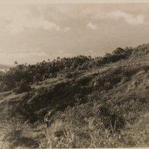 Image of Troia-Landscape - Print, Photographic