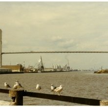Image of 0123-045_08-30-001 - View of Seagulls and the Talmadge Bridge