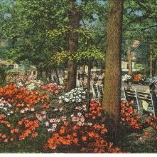 Image of 1121-057_1893 - Azalea Flowers in Forsyth Park