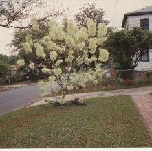 Image of 1121-100_1039 - Spring Yard