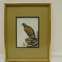Image of Ron Jenkins, Golden Eagle, Watercolor, 8x5.75in