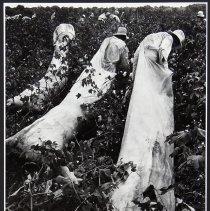 Image of 1974.343 - Print, Photographic