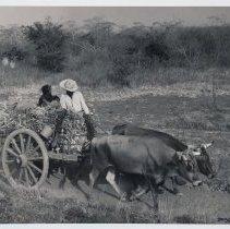 Image of 1977.004.06 - Print, Photographic