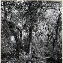 Image of 1979.013.14 - Photograph