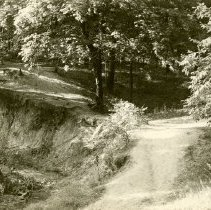 Image of Deer Grove Camp Views - Woods and Road - pc-6-2-2-g-m