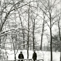 Image of Hikes and Walks - Scenery - Woods in the Winter - pc-6-7-8-c-m
