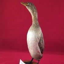 Image of Birds - 72.0155.965