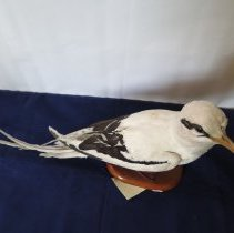 Image of Birds - 72.0158.854