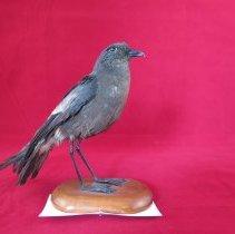 Image of Birds - 72.0160.783
