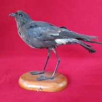 Image of Birds - 72.0161.784