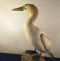 Image of Birds - 72.0169.1139