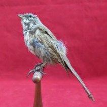 Image of Birds - 72.0781.59