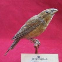Image of Birds - 72.0827.560