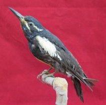 Image of Birds - 85.0045.1099