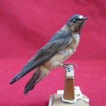 Image of Birds - 85.0094.578