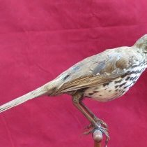 Image of Birds - 85.0175.1188