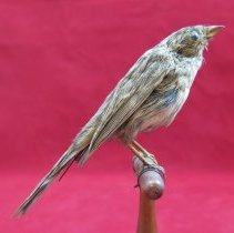 Image of Birds - 85.0286.1114