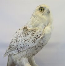 Image of Birds - 72.0119.774