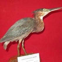 Image of Birds - 72.0192.182