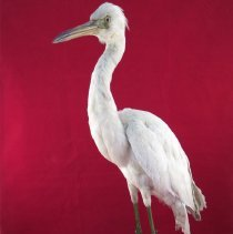 Image of Birds - 72.0194.465