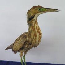 Image of Birds - 72.0202.144
