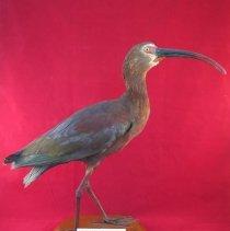 Image of Birds - 72.0205.949