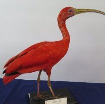Image of Birds - 72.0206.496