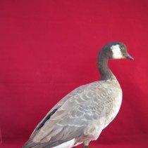 Image of Birds - 72.0208.147