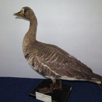 Image of Birds - 72.0210.81