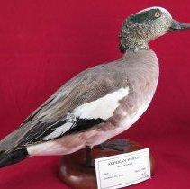 Image of Birds - 72.0216.65