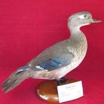 Image of Birds - 72.0217.32