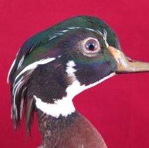 Image of Birds - 72.0218.33