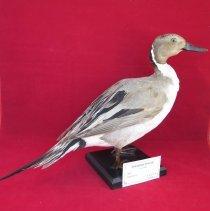 Image of Birds - 72.0220.64