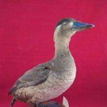 Image of Birds - 72.0235.700