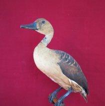 Image of Birds - 72.0241.405