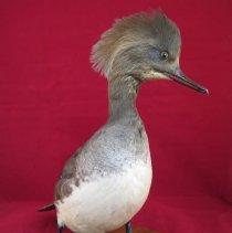 Image of Birds - 72.0249.667
