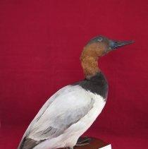 Image of Birds - 72.0255.131