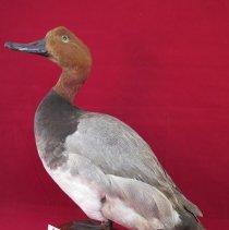 Image of Birds - 72.0257.126