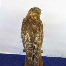 Image of Birds - 72.0272.164