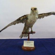 Image of Birds - 72.0289.473