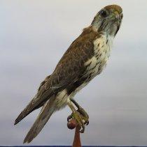 Image of Birds - 72.0294.507