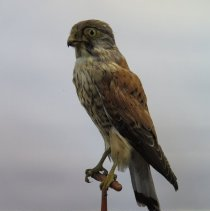Image of Birds - 72.0304.516